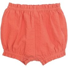serendipity-bloomers-papaya-roed-red