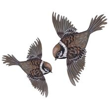 thats-mine-wallstickers-wall-stories-wall-stickers-flying-sparrows-08120